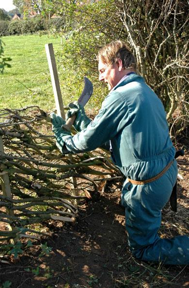 Simon Woods, from Davenham. Simon is a ranger with Cheshire West & Chester Council, and has been Hedgelaying for more than 30 years.