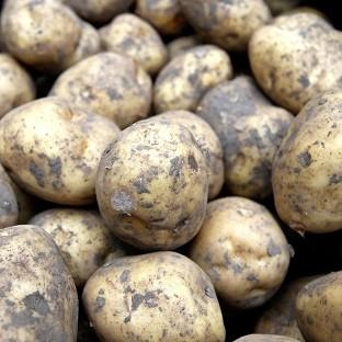 Supermarket Sainsbury's fell victim to a nine million pound potato supply scam