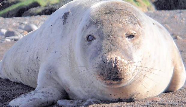 Crewe business takes a dive for sick seals