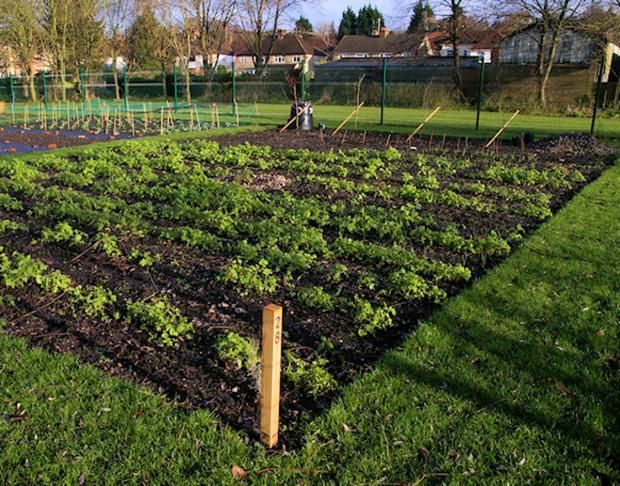 Town council agrees to invest in allotments