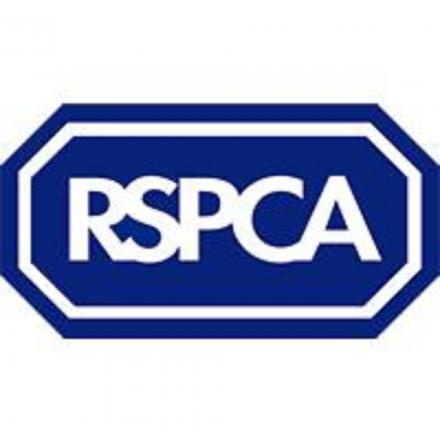 Poorly blackbird is Nantwich RSPCA's 100,000th admittance