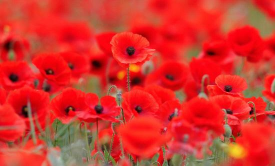 Northwich to host county remembrance service