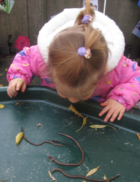 Toddlers on the insect trail