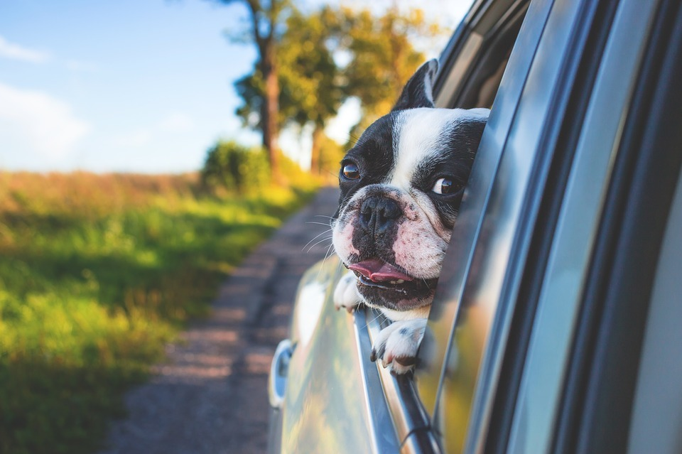 If you don't buckle up your pet in the car you face a £2,500 fine